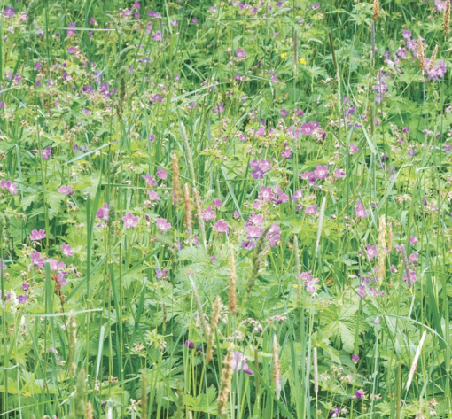 woodland shade meadow mat turf