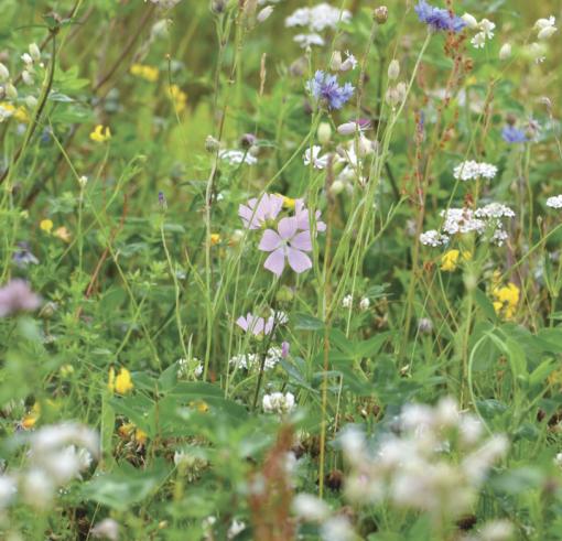 wild flower turf